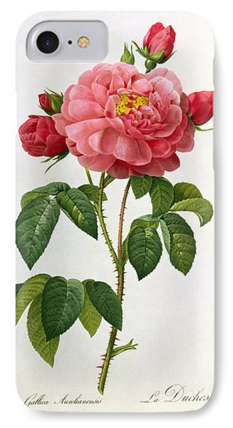 Rosa Gallica Aurelianensis IPhone Case by Pierre Joseph Redoute