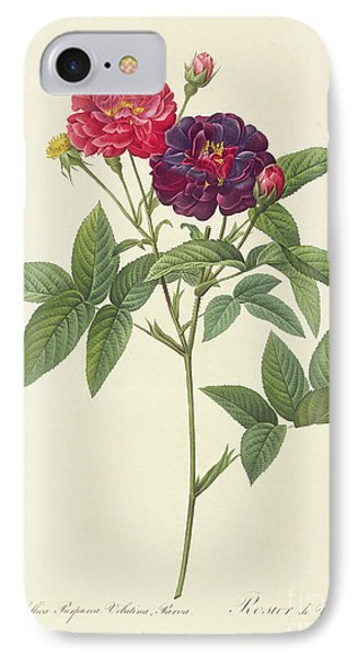 Rosa Gallica Purpurea Velutina IPhone Case by Pierre Joseph Redoute