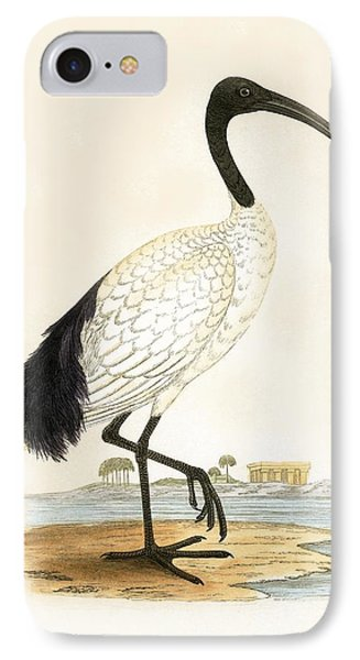 Sacred Ibis IPhone Case by English School