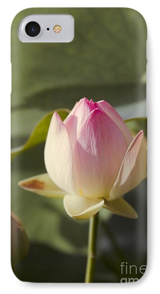 Sacred Lotus - Nelumbo IPhone Case by Sharon Mau