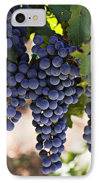 Sauvignon Grapes IPhone 7 Case by Garry Gay
