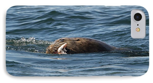 Sea Lion Meal IPhone Case by Mike Dawson