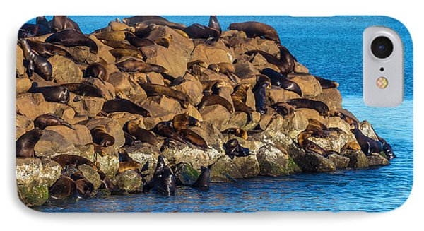 Sea Lions Sunning On Rocks IPhone Case by Garry Gay
