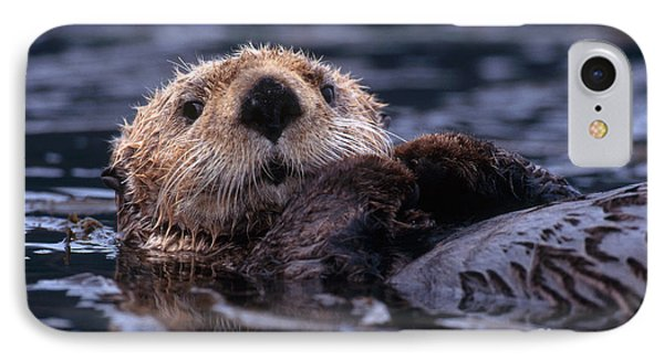 Sea Otter IPhone 7 Case by Yva Momatiuk and John Eastcott and Photo Researchers