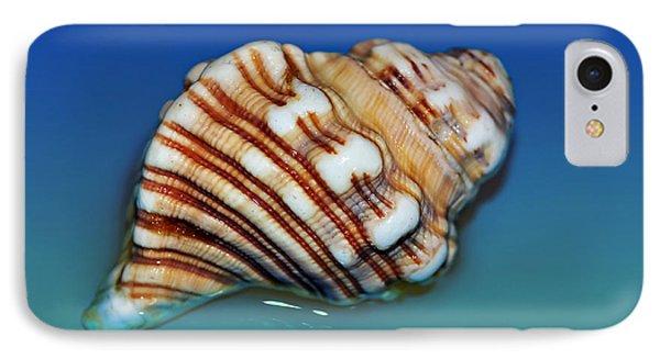 Seashell Wall Art 1 Phone Case by Kaye Menner