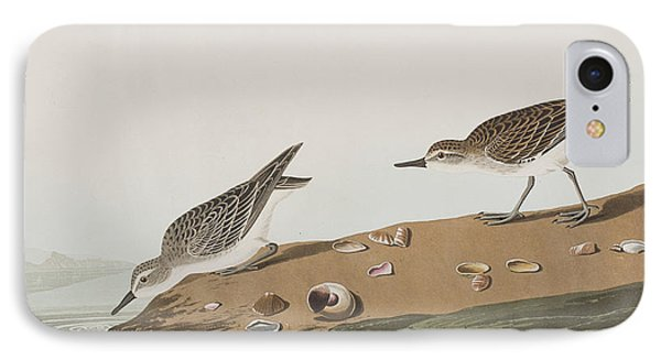 Semipalmated Sandpiper IPhone Case by John James Audubon