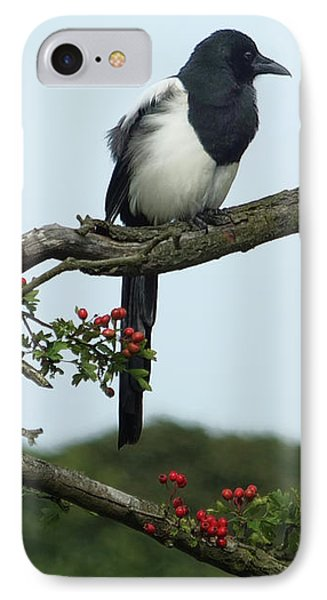 September Magpie IPhone Case by Philip Openshaw