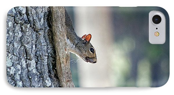 Shy Squirrel Phone Case by Kenneth Albin