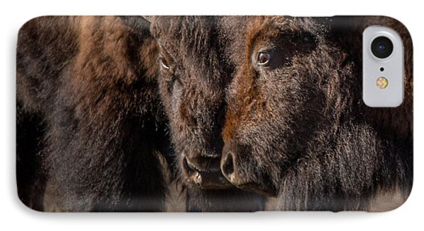 Siblings // Lamar Valley, Yellowstone National Park IPhone Case by Nicholas Parker