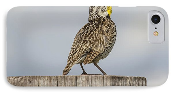 Singing A Song IPhone Case by Thomas Young