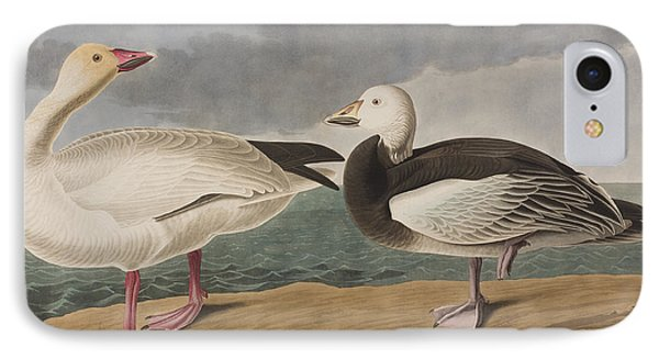 Snow Goose IPhone Case by John James Audubon