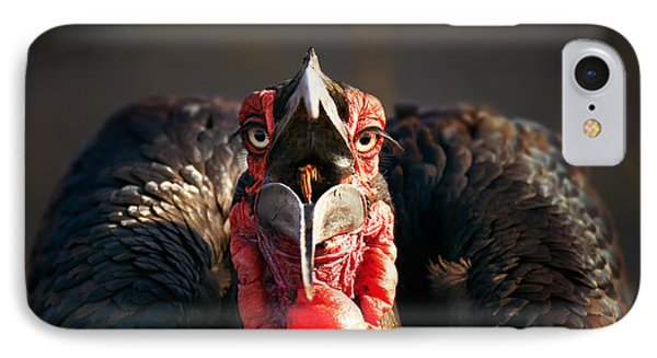 Southern Ground Hornbill Swallowing A Seed IPhone Case by Johan Swanepoel