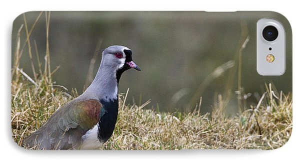 Southern Lapwing IPhone 7 Case by Jean-Louis Klein & Marie-Luce Hubert
