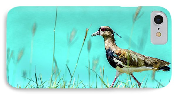 Southern Lapwing IPhone 7 Case by Randy Scherkenbach