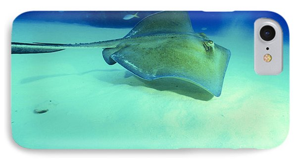 Southern Sting Ray Phone Case by Gregory Ochocki and Photo Researchers