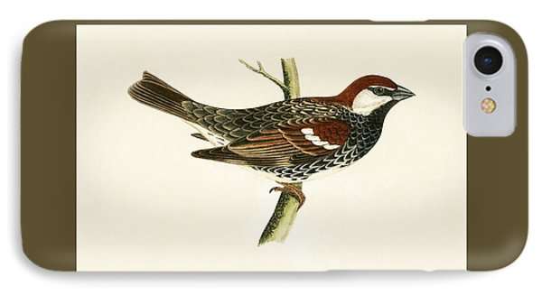 Spanish Sparrow IPhone Case by English School
