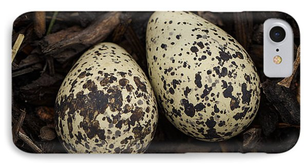 Speckled Killdeer Eggs By Jean Noren IPhone Case by Jean Noren