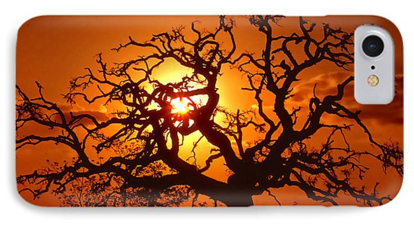 Spooky Tree Phone Case by Stephen Anderson