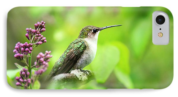 Spring Beauty Ruby Throat Hummingbird IPhone Case by Christina Rollo