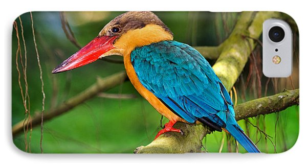Stork-billed Kingfisher IPhone Case by Louise Heusinkveld