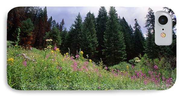 Striking Beauty IPhone Case by Soli Deo Gloria Wilderness And Wildlife Photography