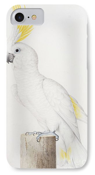 Sulphur Crested Cockatoo IPhone Case by Nicolas Robert