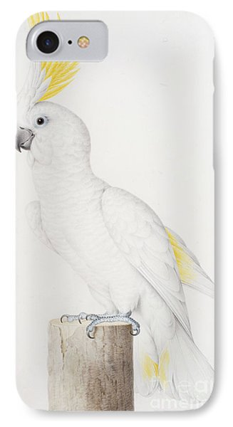 Sulphur Crested Cockatoo IPhone 7 Case by Nicolas Robert