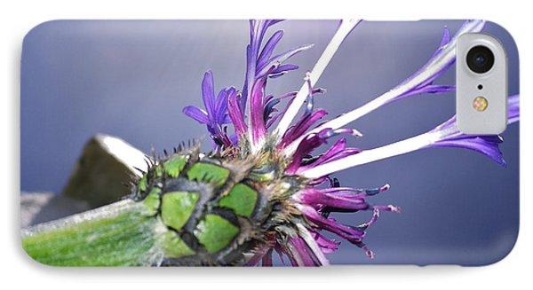 Sunburst Cornflower IPhone Case by Richard Brookes