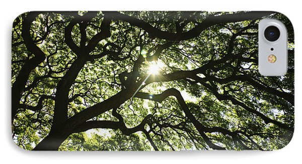 Sunburst Through Tree Phone Case by Brandon Tabiolo - Printscapes