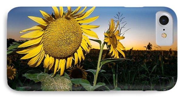 Sunflower Evening IPhone Case by Robert Frederick
