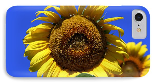 Sunflower Series 09 Phone Case by Amanda Barcon