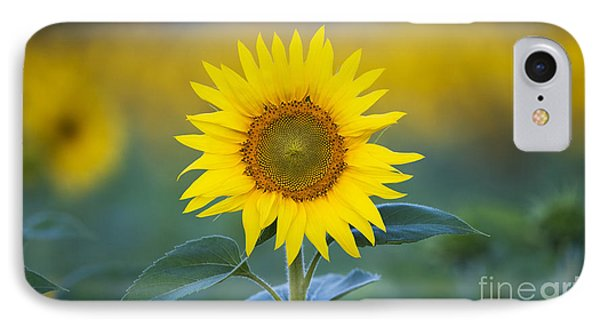 Sunflower IPhone 7 Case by Tim Gainey