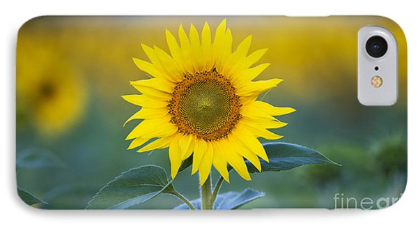 Sunflower IPhone Case by Tim Gainey