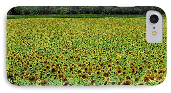 Sunflowers Sunflowers IPhone Case by George Savic