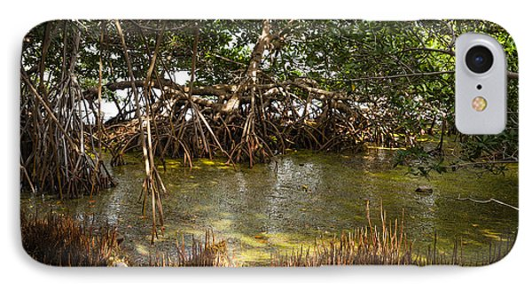 Sunlight In Mangrove Forest IPhone Case by Elena Elisseeva