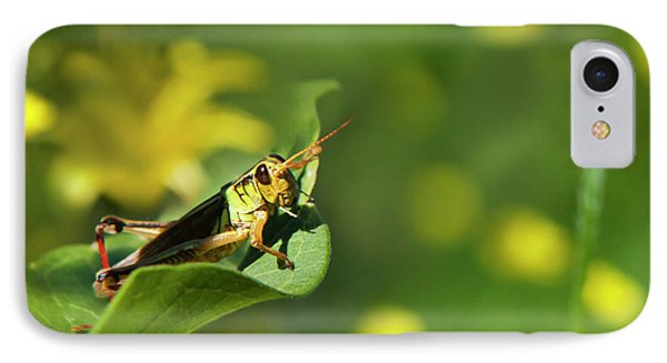 Green Grasshopper IPhone Case by Christina Rollo