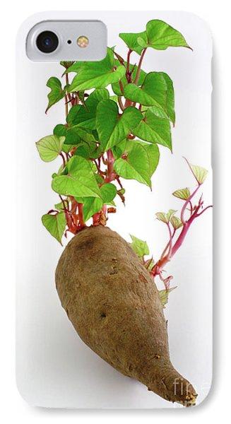 Sweet Potato IPhone Case by Gaspar Avila
