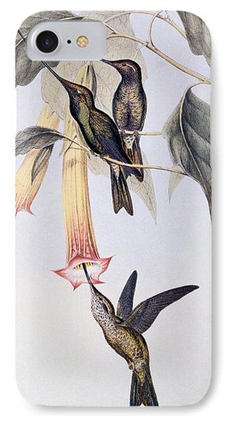 Sword-billed Humming Bird  IPhone Case by John Gould