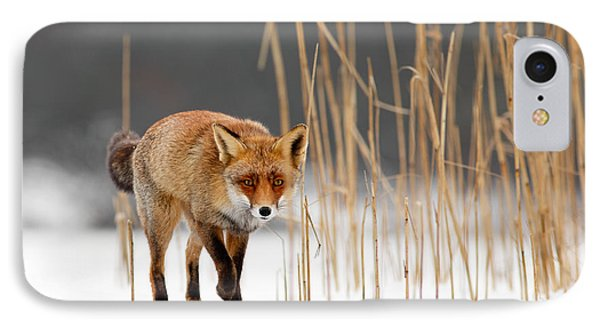 The Catcher In The Reed - Red Fox Walking On Ice IPhone Case by Roeselien Raimond