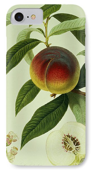 The Galande Peach IPhone 7 Case by William Hooker