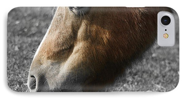 The Hungry Horse IPhone Case by Nichola Denny