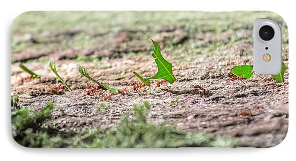 The Leaf Parade  IPhone Case by Betsy Knapp