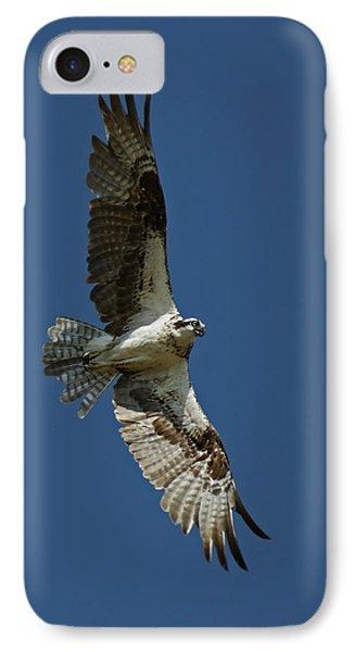 The Osprey IPhone Case by Ernie Echols