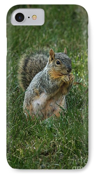 The Praying Squirrel IPhone Case by Robert Bales