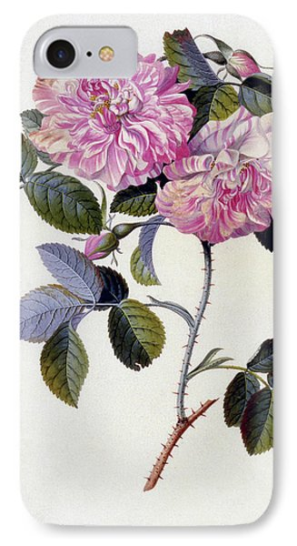 The Striped Monthly Rose IPhone Case by Georg Dionysius Ehret