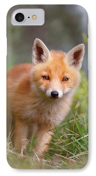 The Young And Eager Red Fox Kit IPhone Case by Roeselien Raimond