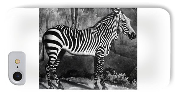 The Zebra IPhone Case by George Stubbs