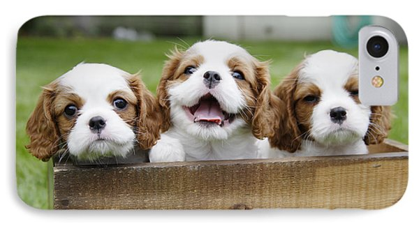 Three Cocker Spaniels Peeking IPhone Case by Gillham Studios