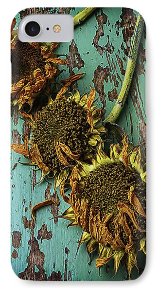 Three Dried Sunflowers IPhone Case by Garry Gay