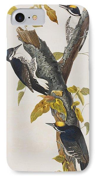 Three Toed Woodpecker IPhone Case by John James Audubon